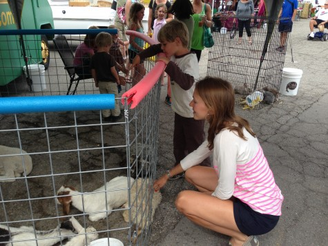 Sophie with the baby goats