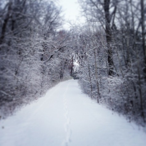 The first big snowfall for Minnesota! A snowy view up my driveway.